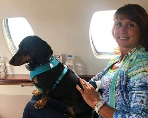 Private jet dog