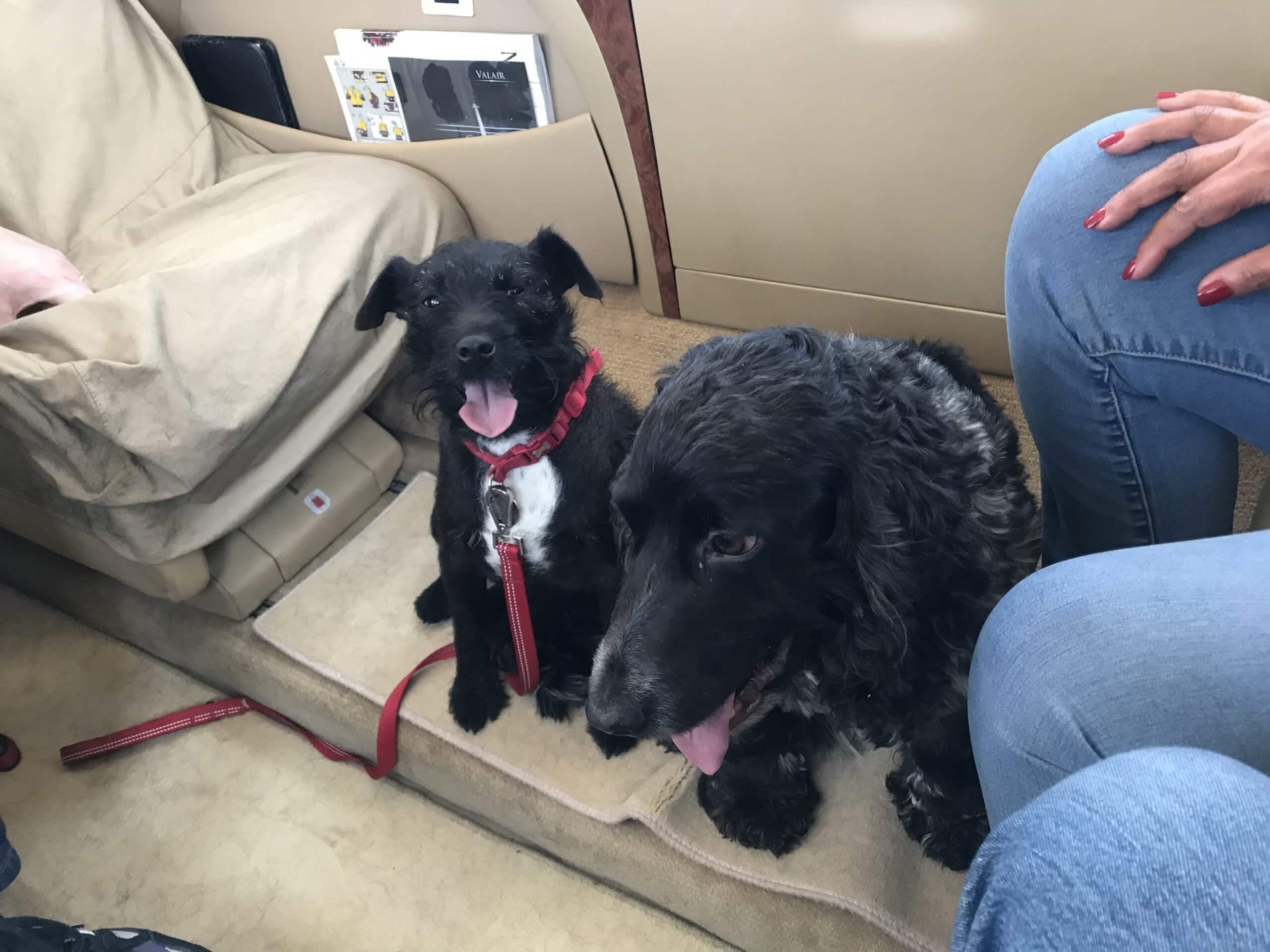 Pet flights Dijon